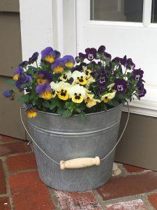 Bucket of Pansies