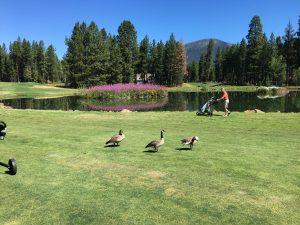 Photo of Glaze Meadow Golf Course